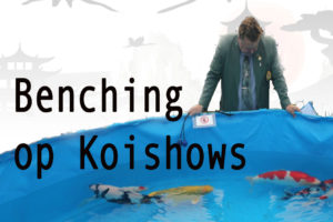 Benching op Koi shows